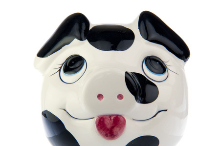 cash cow: Pig in black and white cow print, close up from front