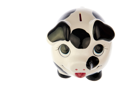 Piggy bank with black and white cow spots, top front look, isolated in white background photo