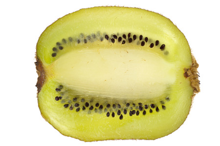 A green kiwi cut accross its centre and isolated in white background photo
