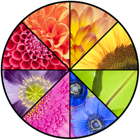 windflower: Rainbow collage of red orange yellow green blue pink violet purple colors of Dahlia Sunflower Fern leaf Anemone Windflower Gerbera and Poppy flowers in closeup and in a circular wheel frame