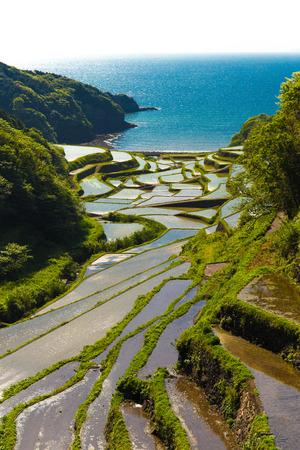 saga: Terraced paddy fields 100 Japan: terraced rice fields may hamanoura saga of landscape