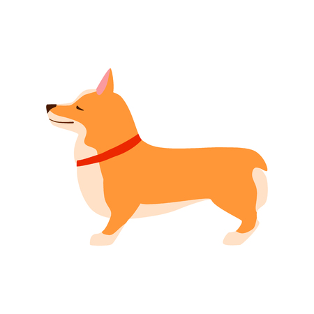 Happy cute dog. Welsh Corgi. Puppy performs the command to stand up. Flat vector illustration.