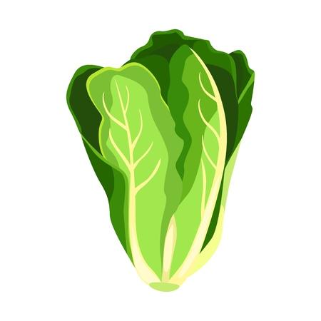 Römersalat-Salatpflanze. Natur organische frische grüne Gemüseblätter.