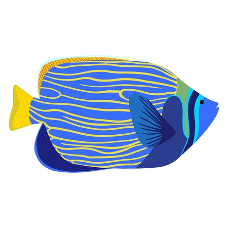 Emperor angelfish cartoon isolated illustration. Pomacanthus imperator vector