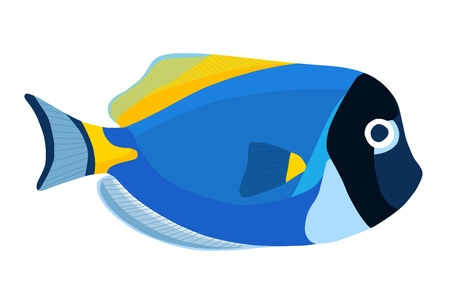 Powder blue tang fish. Acanthurus surgeon fish icon isolated on white background