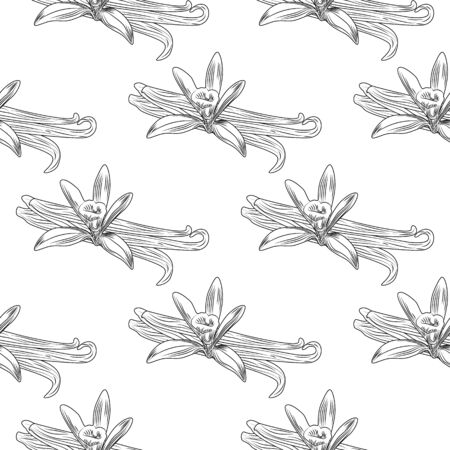 Hand drawn vanilla flower seed plant branch leaf seamless pattern. Engraving style. Design for fabric, textile print, wrapping paper. Vector illustration