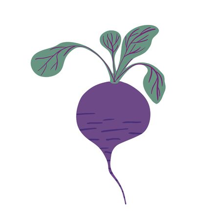 Hand drawn beetroot isolated on white background. Doodle beet vegetable. Vegetarian healthy food. Fresh organic raw food ingredient. Cute vector illustration