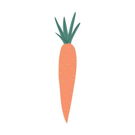 Carrot in doodle style isolated on white background. Hand drawn vegetable. Fresh organic ingredient. Vegetarian healthy food. Vector illustration