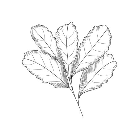 Leaves in engraved style. Leaf isolated on white background. vector illustration Çizim
