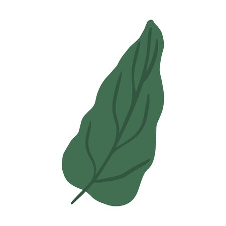 Vegetable leaves. Vegan, farm, organic, natural. Green leaf isolated on white background. Flat simple vector illustration