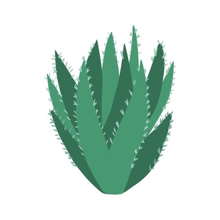 Aloe vera cactus in doodle style. Cute prickly green cactus. Cacti flower isolated on white background. Hand drawn floral vector illustration.