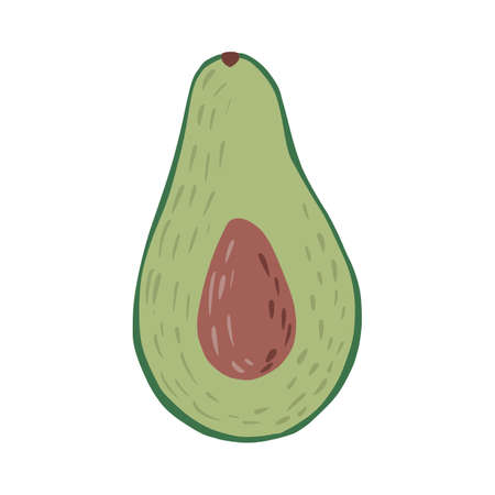 Half avocado with seed isolated on white background. Abstract botanical illustration in doodle vector illustration. Vettoriali
