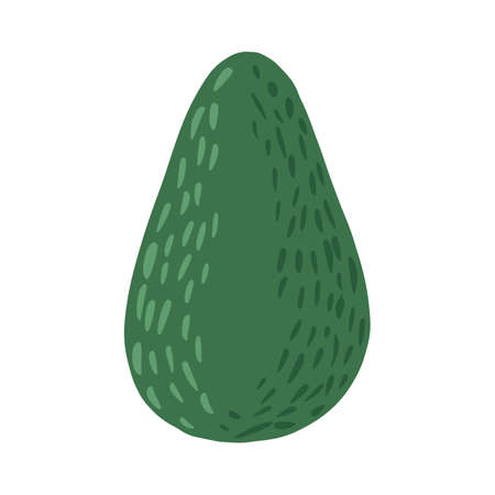 Whole avocado isolated on white background. Abstract botanical illustration in doodle vector illustration.