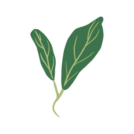Sprig with leaves isolated on white background. Abstract botanical illustration in doodle vector illustration.