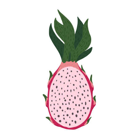 Half dragon fruit isolated on white background. Tropical food pink color in doodle style vector illustration. Stock Illustratie