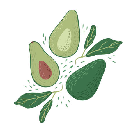 Composition avocado on white background. Abstract botanical illustration whole, half with seed and sprig in doodle vector illustration.