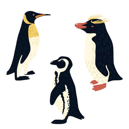 Set penguins isolated on white background. Different penguin: african, macaroni, emperor. Cute birds from arctic hand drawn style. Collection funny cartoon character. Design vector illustration.