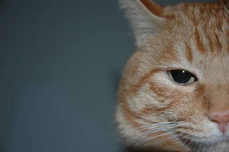 profound: cat eyes