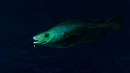 fauna: Diferentes im�genes hermosas de un arrecife de coral o fondo del mar. La vegetaci�n y la fauna.