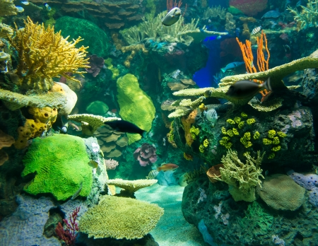 secreted: Coral reefs are underwater structures made from calcium carbonate secreted by corals. Coral reefs are colonies of tiny animals found in marine waters that contain few nutrients. Stock Photo