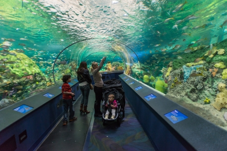 Toronto, Canada -November 14, 2013  Tunnel inside Ripley s Aquarium  The Aquarium is a 12,500 square-metre awe-inspiring attraction with more than 5 7 million litres of water depicting marine and freshwater habitats from around the world