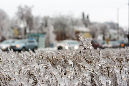 Details of an ice storm in Toronto, Canada  Beautiful ice on leaves and trees  White Christmas photo