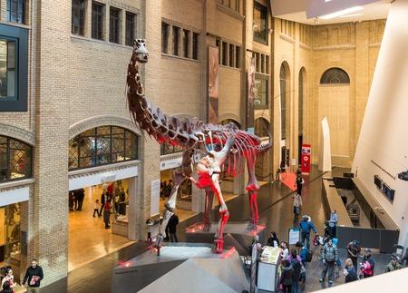 トロント、カナダ-3 月 15,2014: ロイヤル オンタリオ博物館の入り口です。ロイヤル オンタリオ博物館 (ROM) は、世界の中でですか?有数の自然史と世界 報道画像