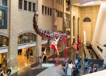 TORONTO,CANADA-MARCH 15,2014: Entrance of the Royal Ontario Museum. The Royal Ontario Museum (ROM) is among the worldâ??s leading museums of natural history and world cultures.