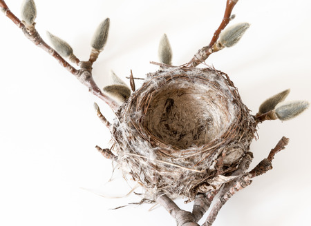 birdnest: Nature concepts: beautiful real natural bird nest including branch over white background