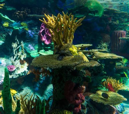 calcium carbonate: Dettagli del fondo barriera corallina, le barriere coralline sono strutture sottomarine a base di carbonato di calcio secreto da coralli. Le barriere coralline sono colonie di piccoli animali trovati in acque marine che contengono poche sostanze nutritive. Archivio Fotografico