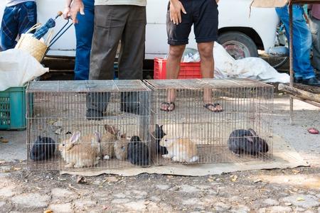 sacrifice: noticias de Cuba: la venta de animales vivos para la alimentación es común. El comprador debe el sacrificio que en casa. Se venden más barato pero si no se vende el vendedor tiene cero perdida.