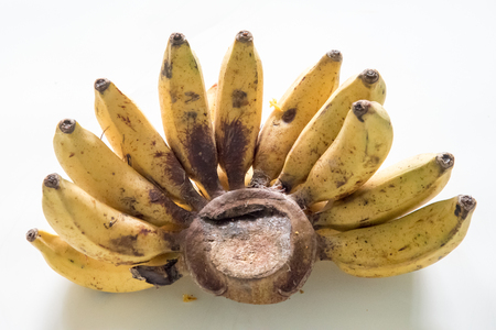 expensive food: Bunch of ripe banana fruits against white background. Bananas are some of the products bought by Cubans everyday at expensive prices.  The low efficient agricultural industry in Cuba necessitates import of food produce which means higher prices.