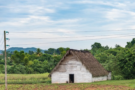 optimum: Tobacco houses are picturesque construcitons of wood and palm tree leaves. They are used to store the just harvested leaves and also to curate them.  and achieve the great quality and aroma. There the leaves reach the optimum maturity,color and aroma need