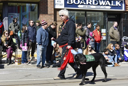 notorious: Trainer of Guide Dogs marching during the Lions Club Easter parade which celebrates its 50th anniversary Editorial
