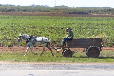 recuperation: Cuban lifestyle and signs of economic recuperation:  man riding in horse drawn carriage, planted field in the background.