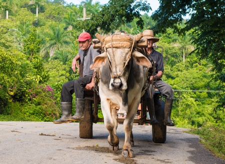 Inhabitants of the Cuban mountains riding an ox drawn carriage. El Nicho used to be a guerrilla warfare training camp; now it is a tourist park in Sancti Spiritus.