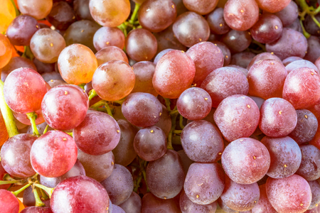 Black Corinth  or Champagne grapes, specialty produce.