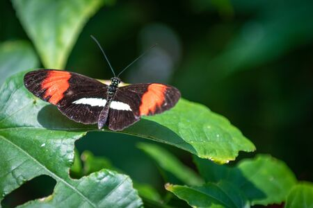 High angle view of a butterfly with orange, white, and black colors. The insect is perched in an orange flower. The animal is seen in the Butterfly Conservatory of Niagara Falls
