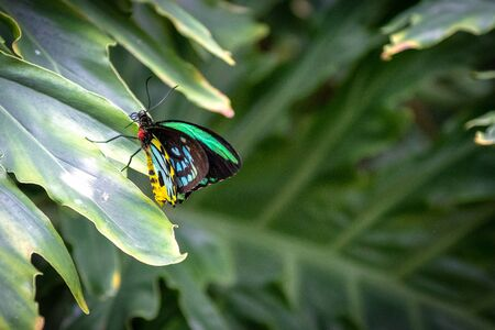 Beautiful green, yellow and white butterfly perched on a plant leaf in the Butterfly Conservatory. The tourist attraction is located outside of the Niagara Falls city.