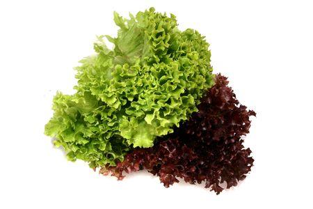 lactuca sativa: lactuca sativa lettuce 1 Stock Photo