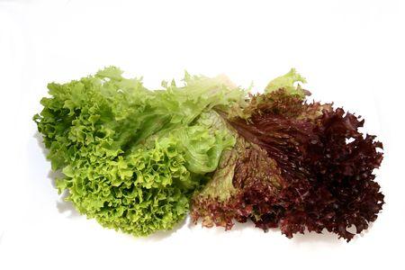 lactuca sativa: lactuca sativa lettuce 2 Stock Photo