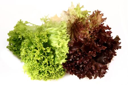 lactuca: lactuca sativa lettuce_green red