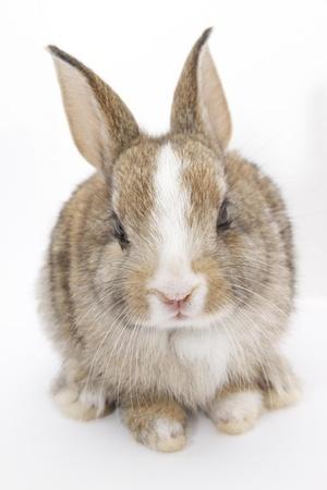 inhabits: rabbit