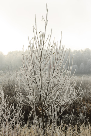 november: branch covered with frost at November