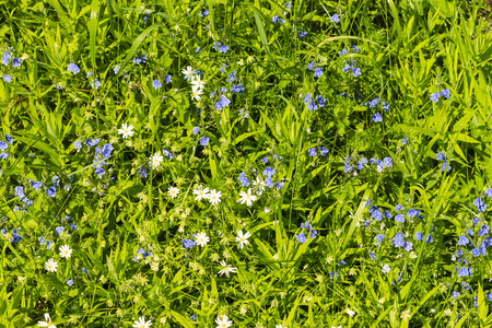 weald: wild flowers at sunny day