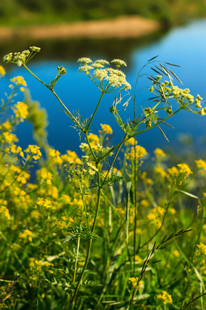 weald: wild flowers at sunny day with grass and river background