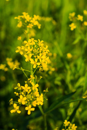weald: wild flowers at sunny day with grass background