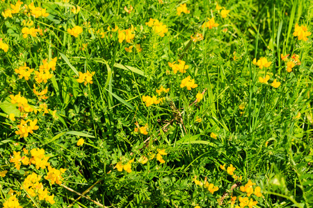 weald: wild flowers at summer sunny day