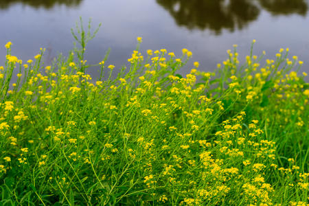 weald: wild flowers at summer sunny day with river background