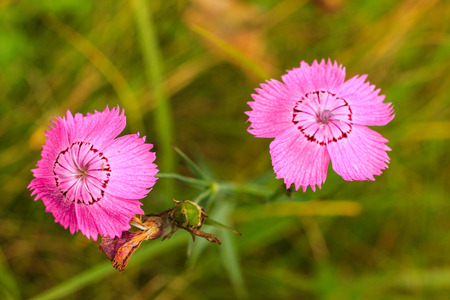 weald: wild flowers at sunny day isolated at meadow background, macro